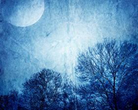 Fotos Himmel Nacht Mond Ast Natur