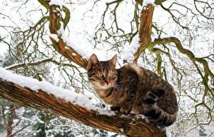 Fotos Winter Katze Ast Schnee Tiere