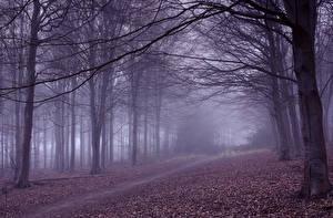 Fotos Herbst Bäume Ast Nebel Weg Natur