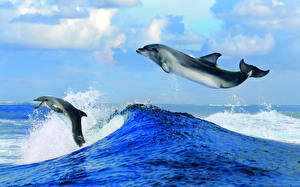 Wallpaper Waves Dolphins Sea Water 2 Jump Animals