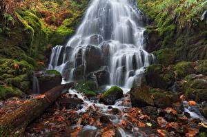 Fotos Wasserfall Steine USA HDR Blattwerk Laubmoose Fairy Falls, Wahkeena Falls, Columbia River Gorge, Oregon Natur