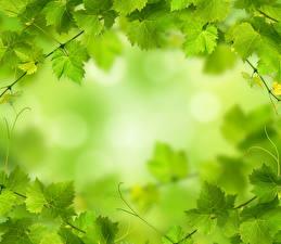 Photo Leaf Green Nature