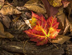 Bilder Herbst Hautnah Blatt Natur