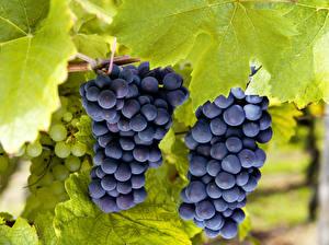 Hintergrundbilder Obst Weintraube Blatt Lebensmittel