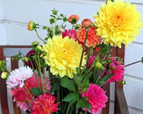 Hintergrundbilder Dahlien Nahaufnahme Knospe Blüte
