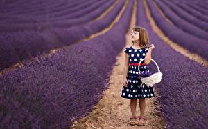 Hintergrundbilder Lavendel Acker Kleine Mädchen Kinder