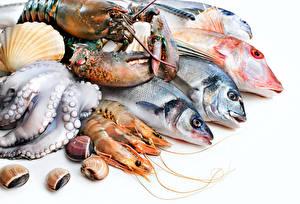 Bilder Meeresfrüchte Fische Hummerartige Garnelen