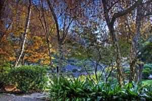 Fotos USA Garten Herbst Kalifornien Bäume Strauch Baumstamm HDRI Earl Burns Miller Japanese Garden Natur
