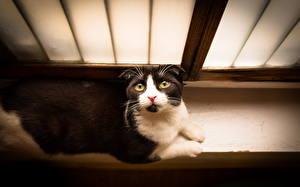 Hintergrundbilder Katze Blick Fenster ein Tier