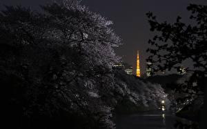 Hintergrundbilder Präfektur Tokio Japan Nacht Ast Städte