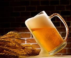Fotos Getränke Bier Becher Ähre Lebensmittel
