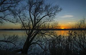 Fotos Italien Sonnenaufgänge und Sonnenuntergänge Flusse Bäume Ast Mantua  Lombardy Natur