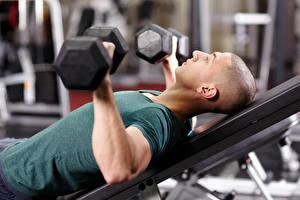 Hintergrundbilder Mann Fitness Hanteln Körperliche Aktivität sportliches