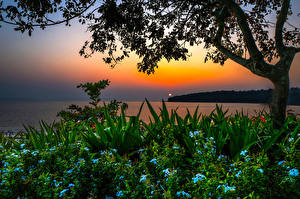 Hintergrundbilder Indien Landschaftsfotografie Sonnenaufgänge und Sonnenuntergänge Flusse Strauch Ast Bambolim beach Goa Natur