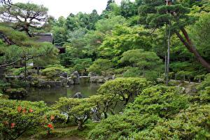Wallpaper Japan Gardens Pond Kyoto Trees Bush Nature