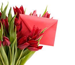 Bilder Tulpen Bordeauxrot Brief Briefumschlag Blumen