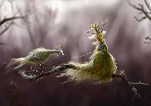 Bilder Supernatural Wesen Zwei Ast Fantasy
