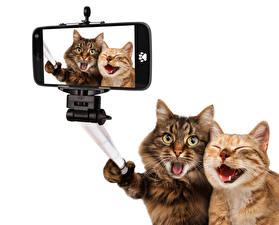 Pictures Cats Two Smartphones Selfie Funny Animals