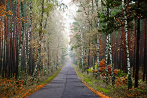 Pictures Forest Roads Autumn Birch Fog Nature