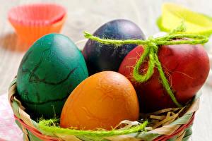 Bilder Feiertage Ostern Hautnah Eier