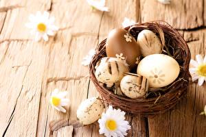 Bilder Feiertage Ostern Kamillen Eier Nest