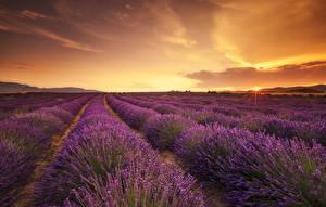 Bilder Felder Lavendel Abend Natur