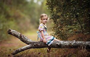 Bilder Sitzend Kleine Mädchen Ast Kinder