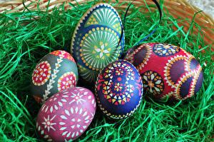 Bilder Feiertage Ostern Eier Design Nest