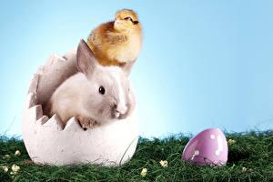 Картинка Пасха Птенец курицы Кролики Яйцо Трава животное