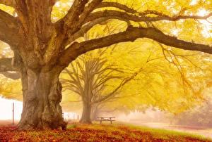 Hintergrundbilder Herbst Bäume Ast Baumstamm Tiere