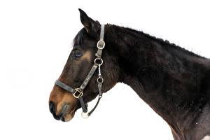 Picture Horses Head Animals