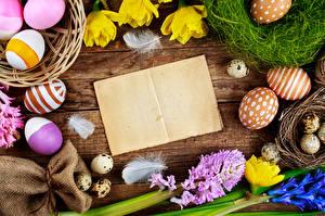Fotos Feiertage Ostern Hyazinthen Tulpen Ei Nest Vorlage Grußkarte