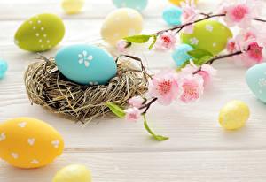 Bilder Feiertage Ostern Ei Nest Ast