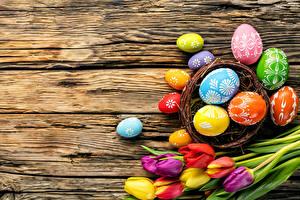 Hintergrundbilder Feiertage Ostern Tulpen Ei Design Nest
