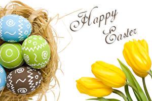 Hintergrundbilder Ostern Tulpen Nest Ei Blumen