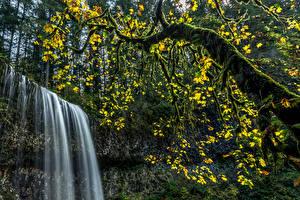 Fotos USA Park Wasserfall Bäume Laubmoose Ast Silver Falls State Park Natur