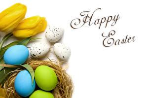 Fotos Feiertage Ostern Tulpen Eier Nest