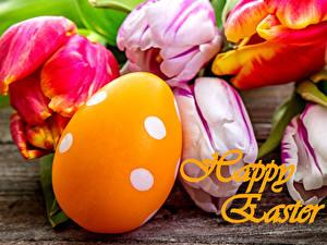 Bilder Tulpen Ostern Hautnah Eier Blumen