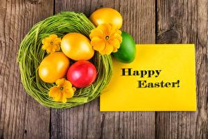 Fotos Feiertage Ostern Schlüsselblumen Ei Nest