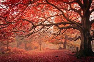 Fotos Herbst Ast Bäume Baumstamm Natur