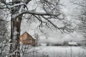 Fotos Winter Bäume Ast Schnee Natur