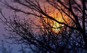 Bilder Sonnenaufgänge und Sonnenuntergänge Ast Natur