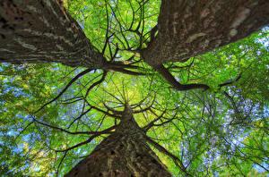 Hintergrundbilder Baumstamm Bäume Ast Untersicht Ansicht von unten Natur