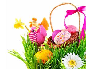 Hintergrundbilder Feiertage Ostern Haushuhn Kamillen Ei Weidenkorb Gras