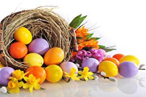Fotos Feiertage Ostern Narzissen Eier Nest