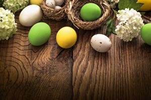 Bilder Feiertage Ostern Hortensien Ei Nest
