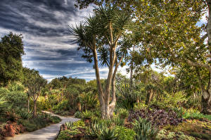 Hintergrundbilder USA Garten Bäume Strauch HDRI Huntington Botanical Gardens San Marino Natur