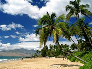 Photo USA Tropics Coast Hawaii Palm trees Clouds Maui Nature