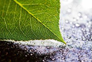 Photo Closeup Macro photography Foliage Drops Nature