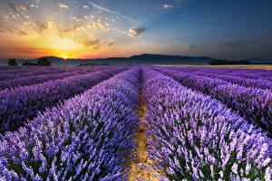 Fotos Landschaftsfotografie Felder Lavendel Morgendämmerung und Sonnenuntergang Himmel Natur